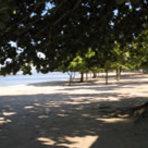Comportamento - Moreninha | São Roque | Coqueiros - Praias