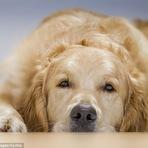 Cães têm emoções e sentimentos?