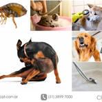 Como se livrar das pulgas do seu pet e da casa