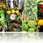 10 Frutas brasileiras que tem o poder de curar!