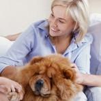Animais em condomínios: Saiba quais são os seus direitos