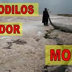 Domador de crocodilos leva tombo e acaba devorado
