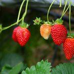 Utilidade Pública - Curso gratuito em SP ensina a semear mudas frutíferas