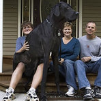 Conheça Zeus, o maior cão do mundo!