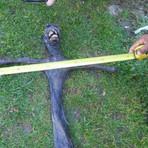 Criatura esquisita achada na África do Sul assusta moradores