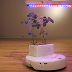 Diversos - Robôs para ajudar o desenvolvimento de plantas.