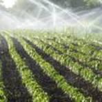 A agricultura é vilã ou vítima na crise hídrica?