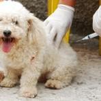 .Dia D da Campanha Nacional de Vacinação Antirrábica. [ Campanha de vacinação de cães e gatos contra raiva começa no ES