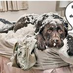 Cão aproveita na saída dos donos e faz loucura na casa