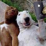 A Hora da Selfie - Humor