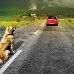Não Morra!! Ande devagar pelas estradas!