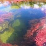 Caño Cristales: O rio mais belo do mundo!