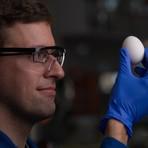 """Cientistas """"descozinham"""" um ovo sem desafiar nenhuma lei da física"""