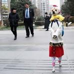 Cadela que anda em pé vestida como criança volta a fazer sucesso na web