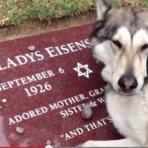 O que esse cão faz no túmulo do seu dono vai emocionar você! Assista!