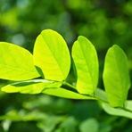 Por que as plantas não sofrem queimaduras solares?