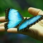 O sábio e borboleta