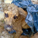 Animais - Cadela 'resgata' filhote jogado em riacho dentro de saco em Poços, MG