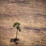 Meio ambiente - 21/03/2015 21h19 - Atualizado em 21/03/2015 21h20 Desmatamento na Amazônia cresce 215% em um ano, segundo o Imazon
