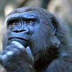 O ser humano surdo e mudo pensa em que idioma ?