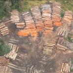 Meio ambiente - Desmatamento na Amazônia cresce 215% em um ano, segundo o Imazon