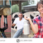 Principais cuidados na ordenha de vacas