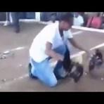 Animais - Galo tem cabeça degolada nesta briga