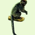 Animais - Os primeiros fósseis dos Macacos Sul americanos
