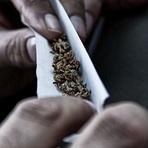 Marijuana é mais segura do que álcool e tabaco, sugere estudo