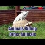 Animais montados em animais