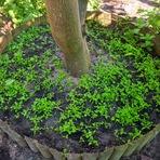 Diversos - Poupar espaço e água na horta!