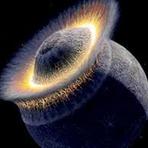 Estados Unidos planejavam explodir a Lua !