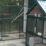 Animais - Viveiros para aves