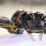 Formigas robôs, seria o nosso futuro industrial?