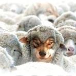 Até hoje não aprendeu? Tenha cuidado com falsos pastores lobos em pele de ovelha.