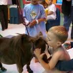 Conheça o menor cavalo do mundo