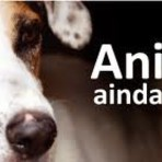 Animais ainda sem voz!