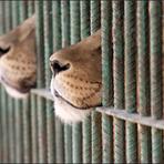 ONG pode salvar animais dos circos do México