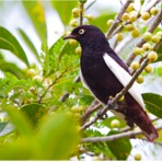 Estado da Paraíba tem 34 espécies ameaçadas de extinção