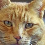 Louis, o gato maligno