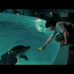 """Safe"" by Westlife - Dolphin Tale"