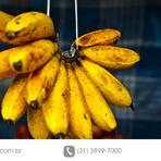Cultivo de banana - principais doenças