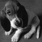 """Crueldade animal será considerada """"crime contra a sociedade"""" pelo FBI"""