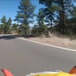 60 Km/h no longboard e vem um veado e te atropela