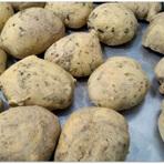 Culinária - Pão de Queijo de Batata Baroa – Sem Lactose e Sem Glúten