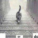 Nova polêmica causando discussão nas redes sociais: o gato dessa foto está subindo ou descendo as escadas?