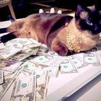 Os gatos que ganharão milhões no Youtube
