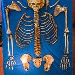 EU APOIO: Um projeto para transformar cadáveres em adubo