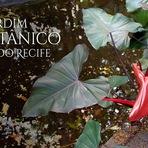 Onde ir no Recife: Jardim Botânico