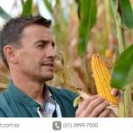 Pragas do milho: controle da lagarta-do-cartucho